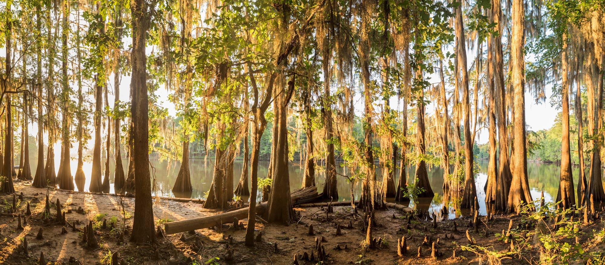 Cypress Grove - Caddo Lake