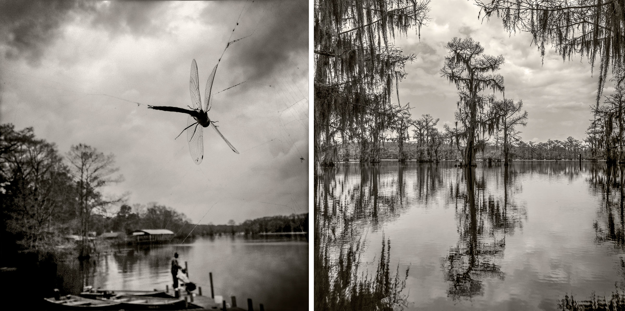 Dragon Fly / Waterway - Caddo Lake