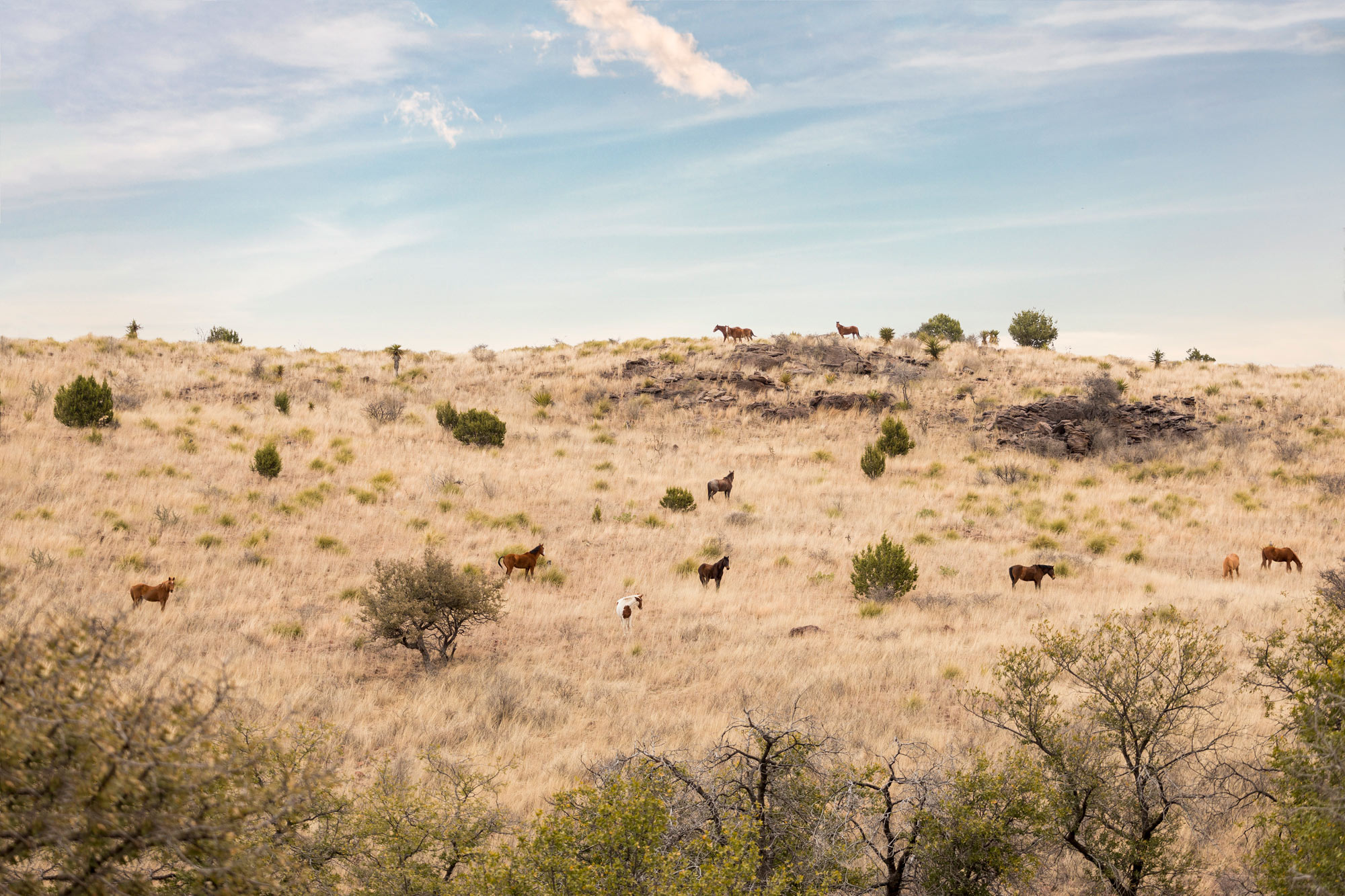 Horses graze in the Davis Mountains in West Texas