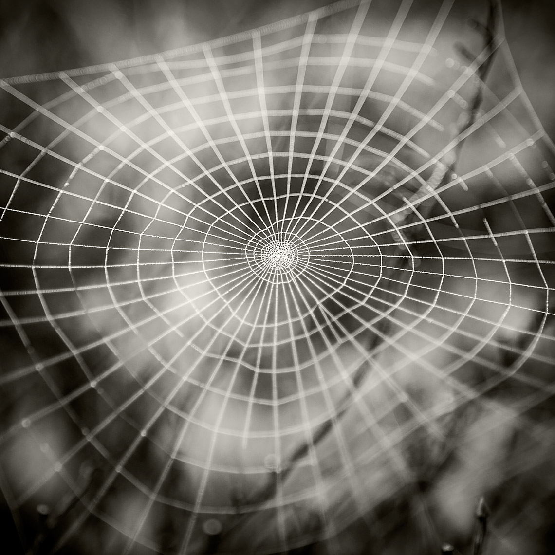 South Padre Island Spider Web