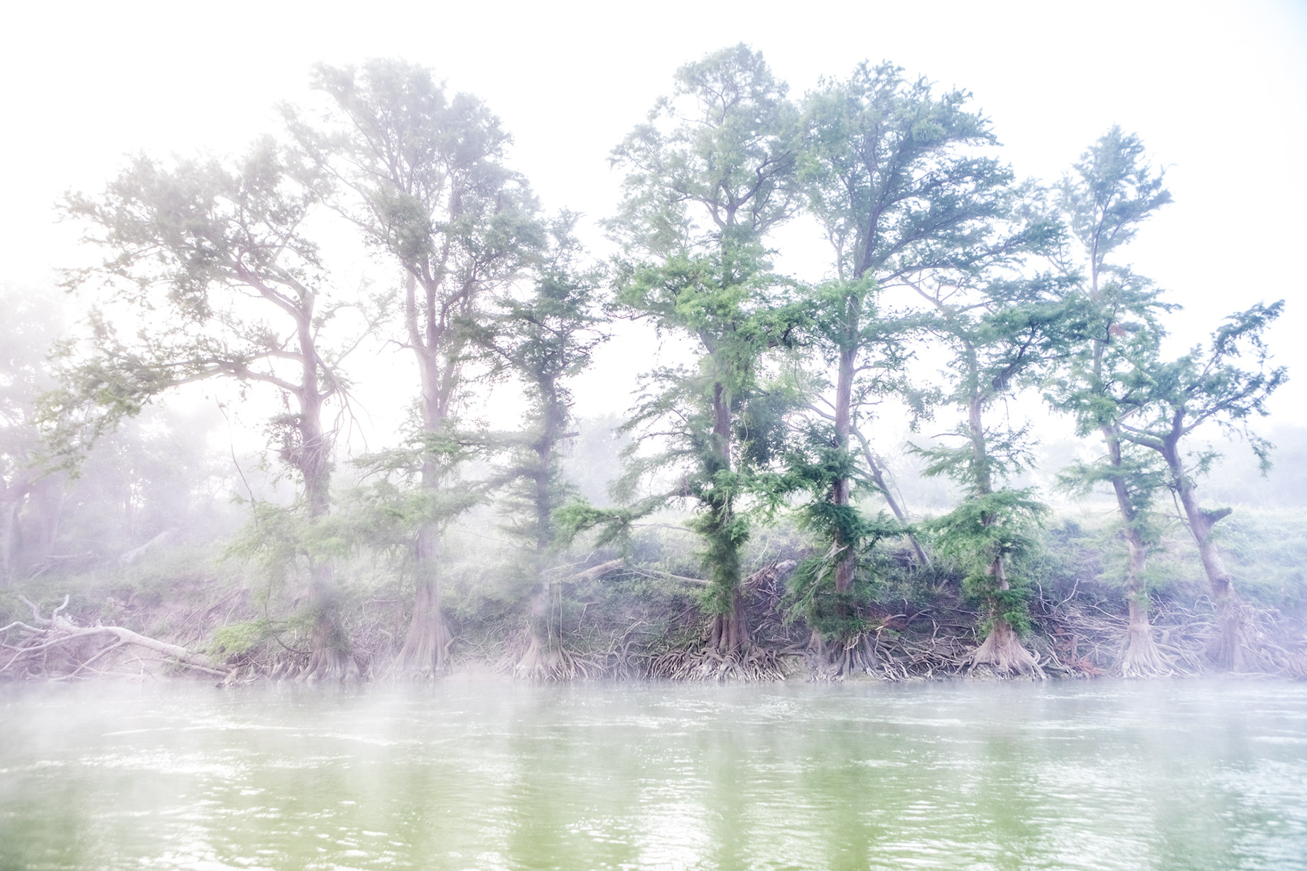 Cypress Trees in Fog on Guadalupe River