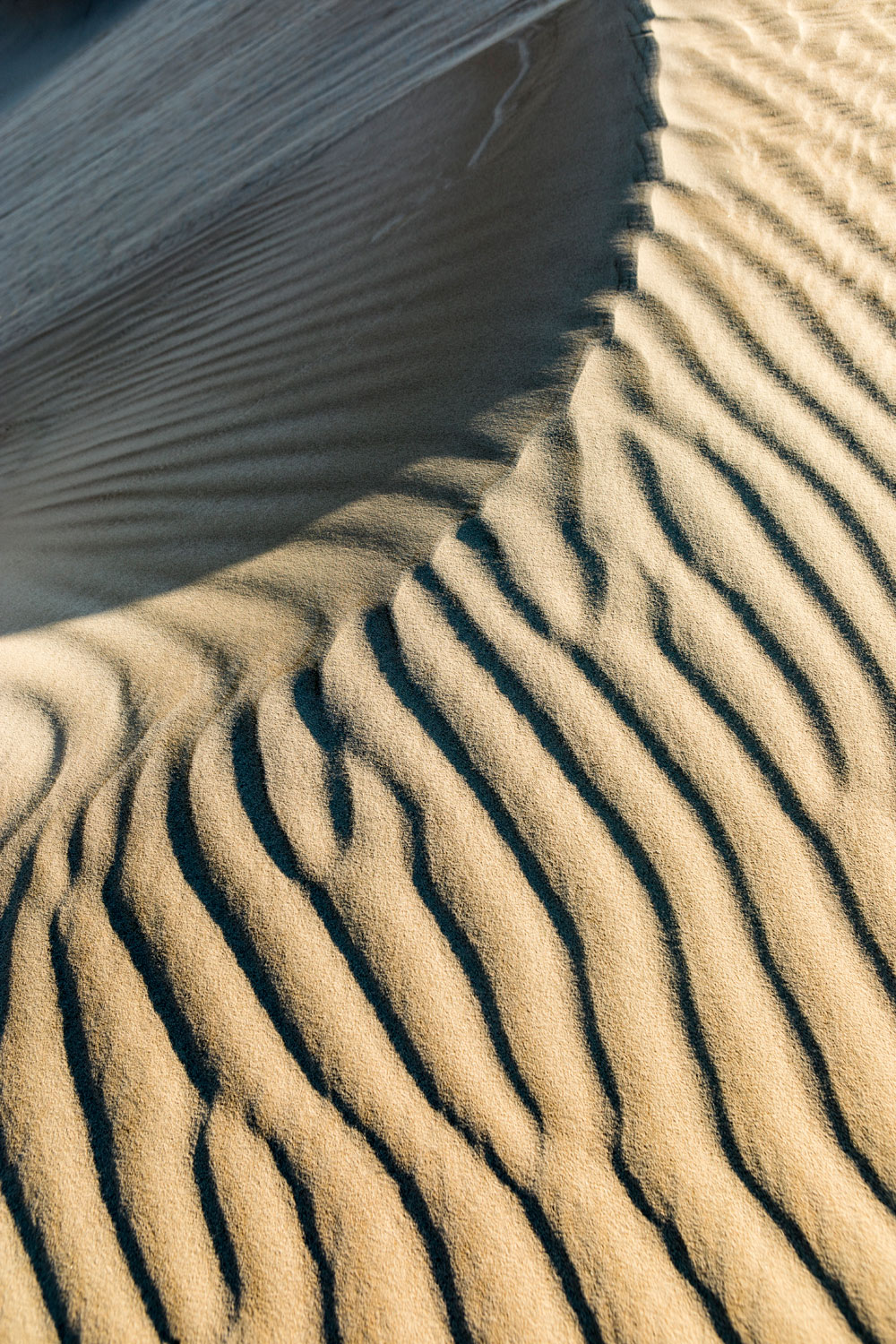 Sand dune ripples - Guadalupe Mountains State Park