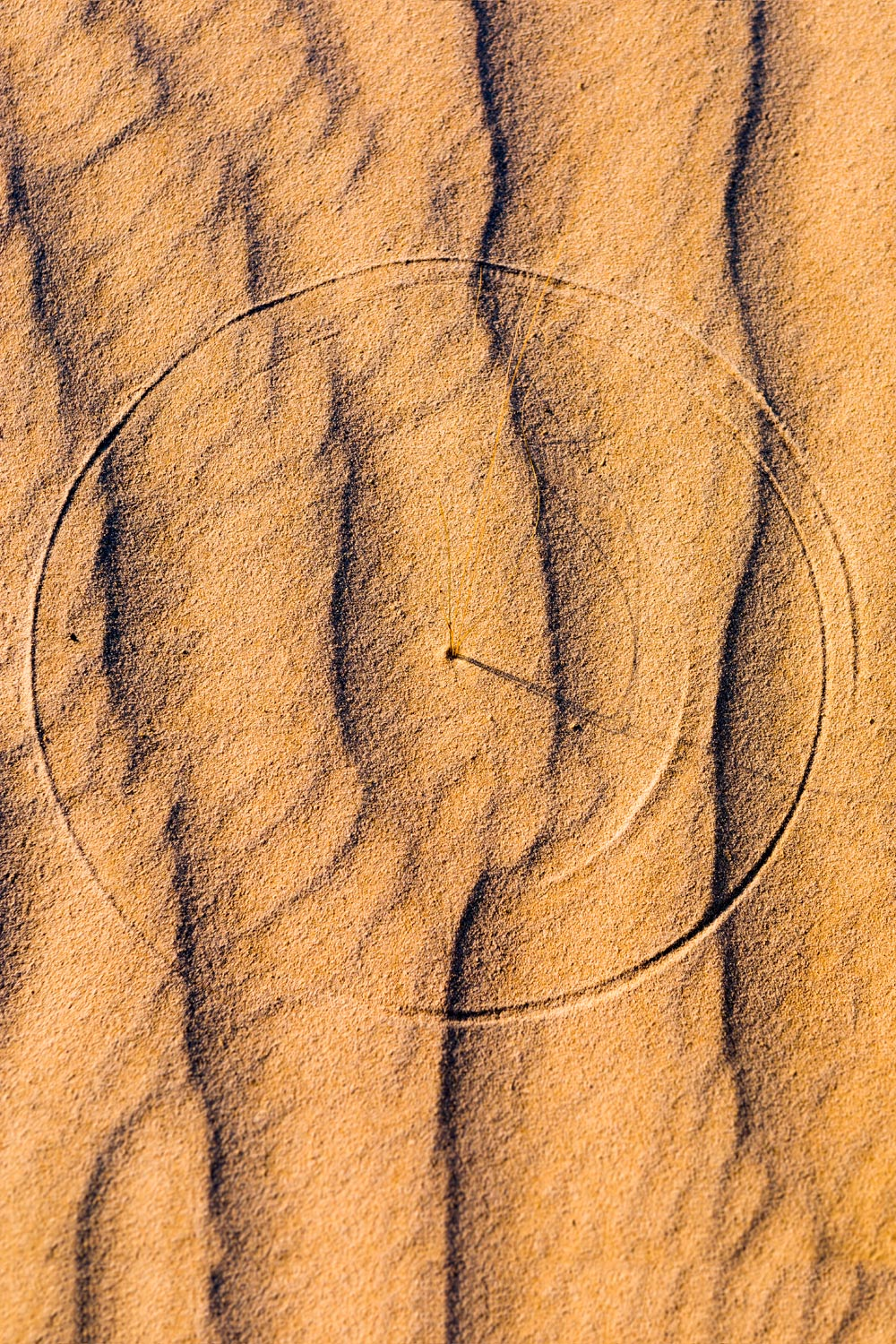 Scratch Circle - sand dunes - Guadalupe Mountains State Park