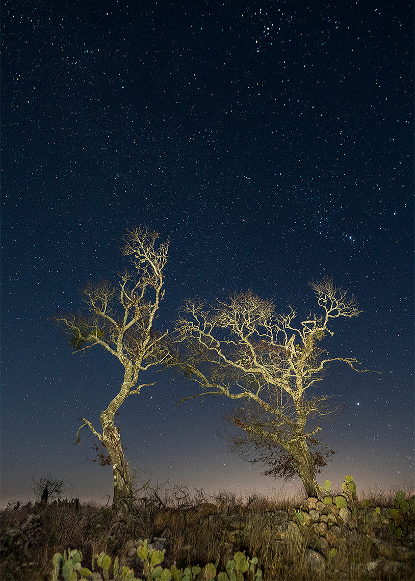 Lovecreek Preserve - night scene with stars and trees