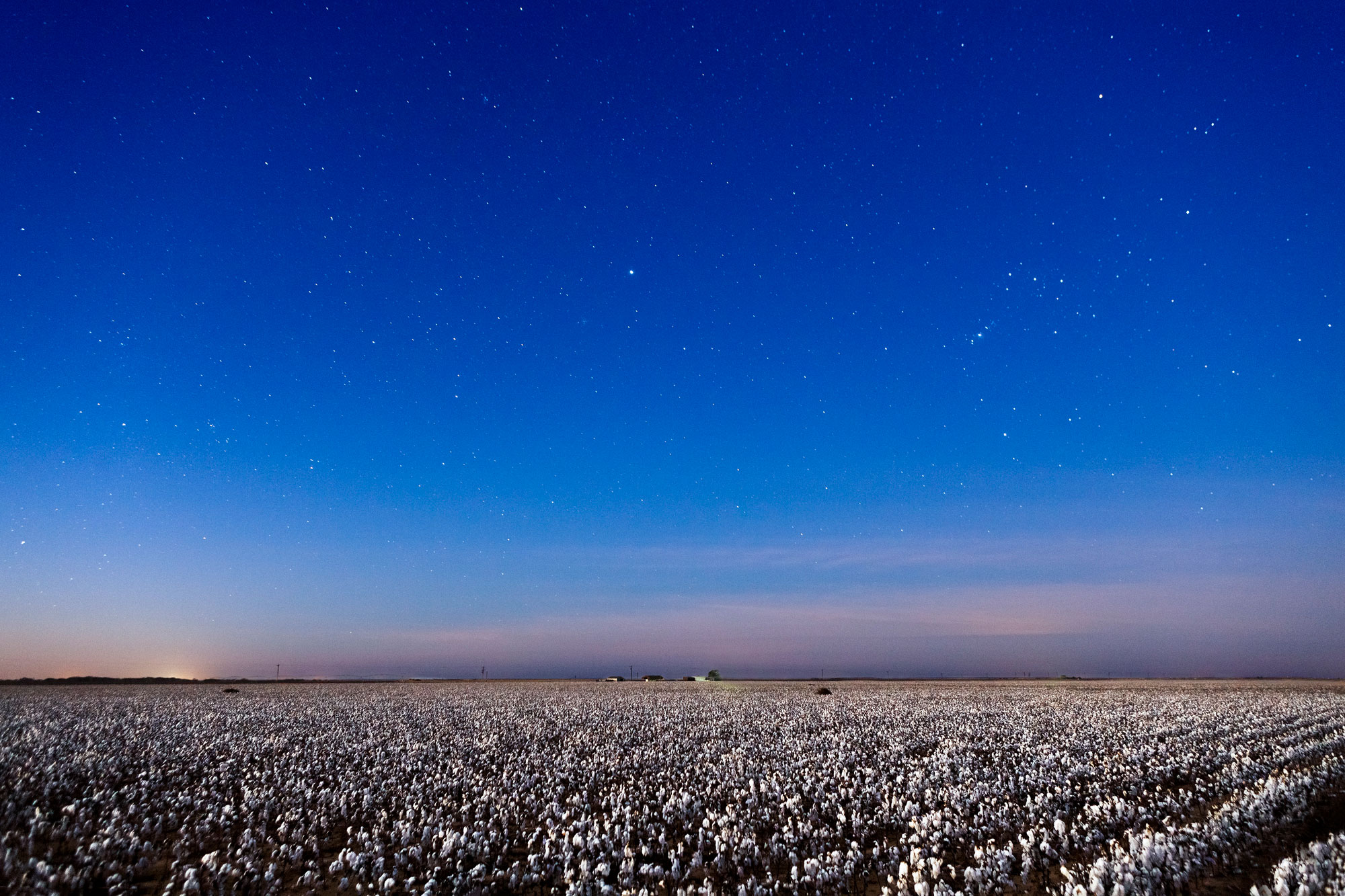 Cotton Field and stars and night