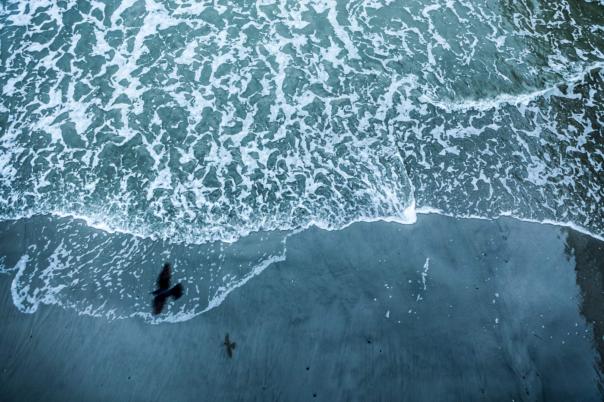 Black bird and shadow from above - water below