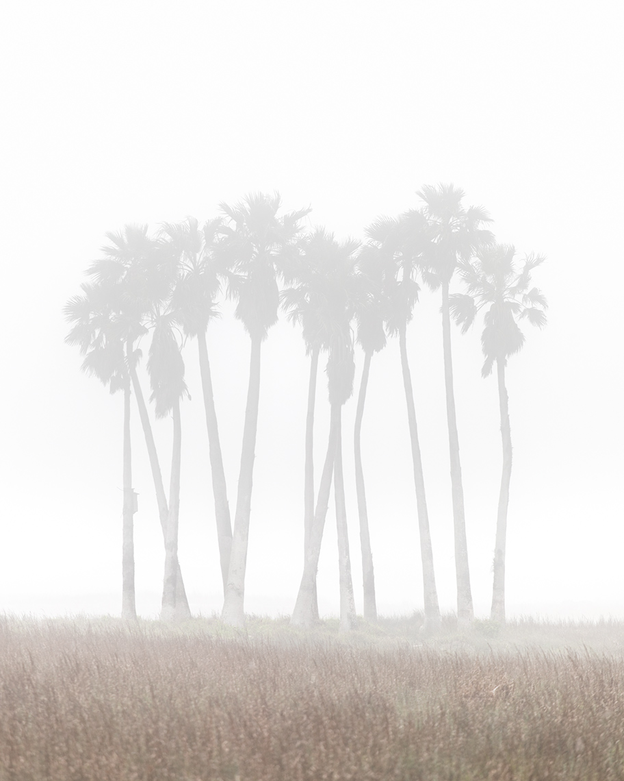 Palm trees in fog - Port Aransas