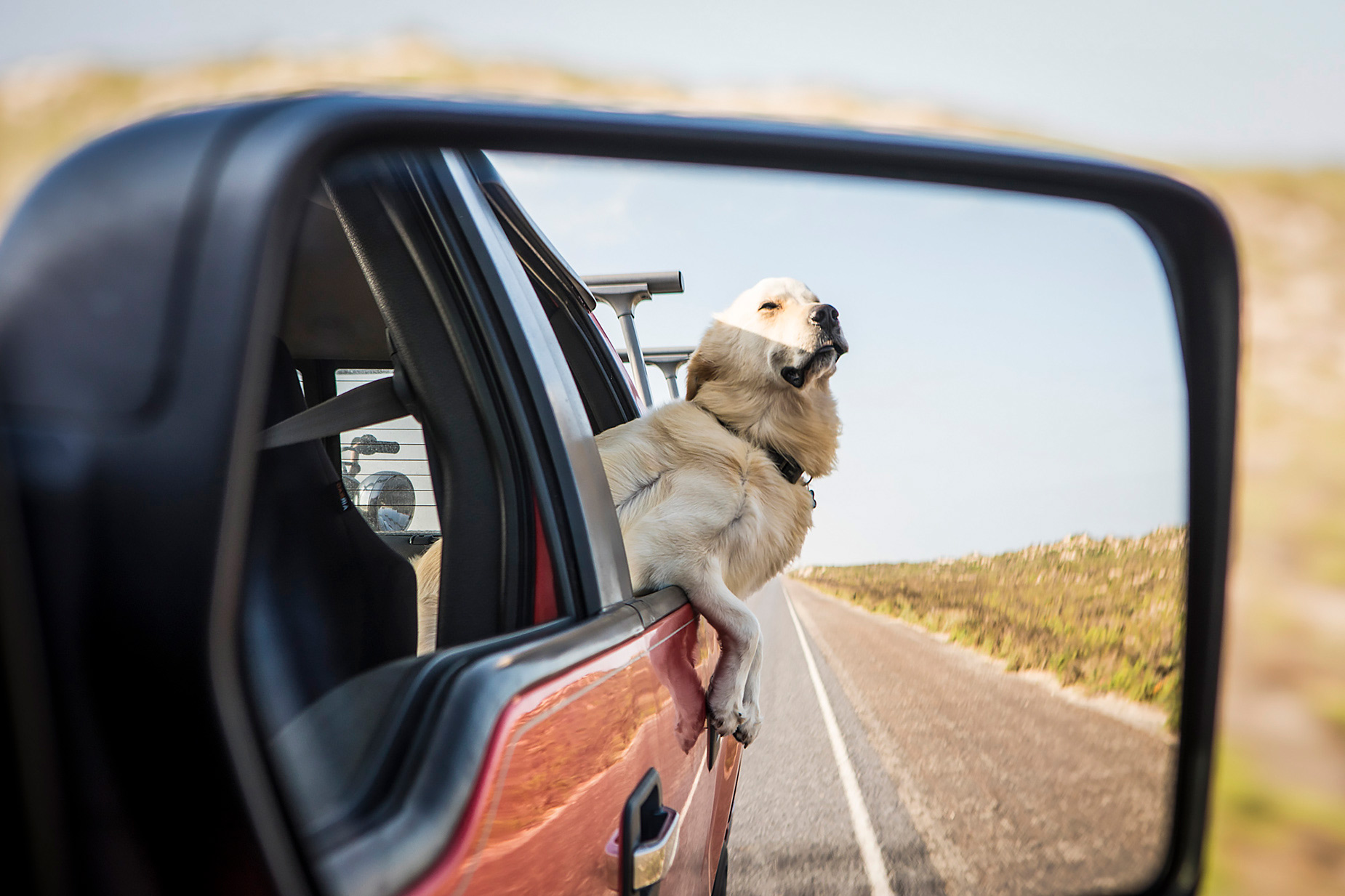 Dog hanging out of truck window on highway