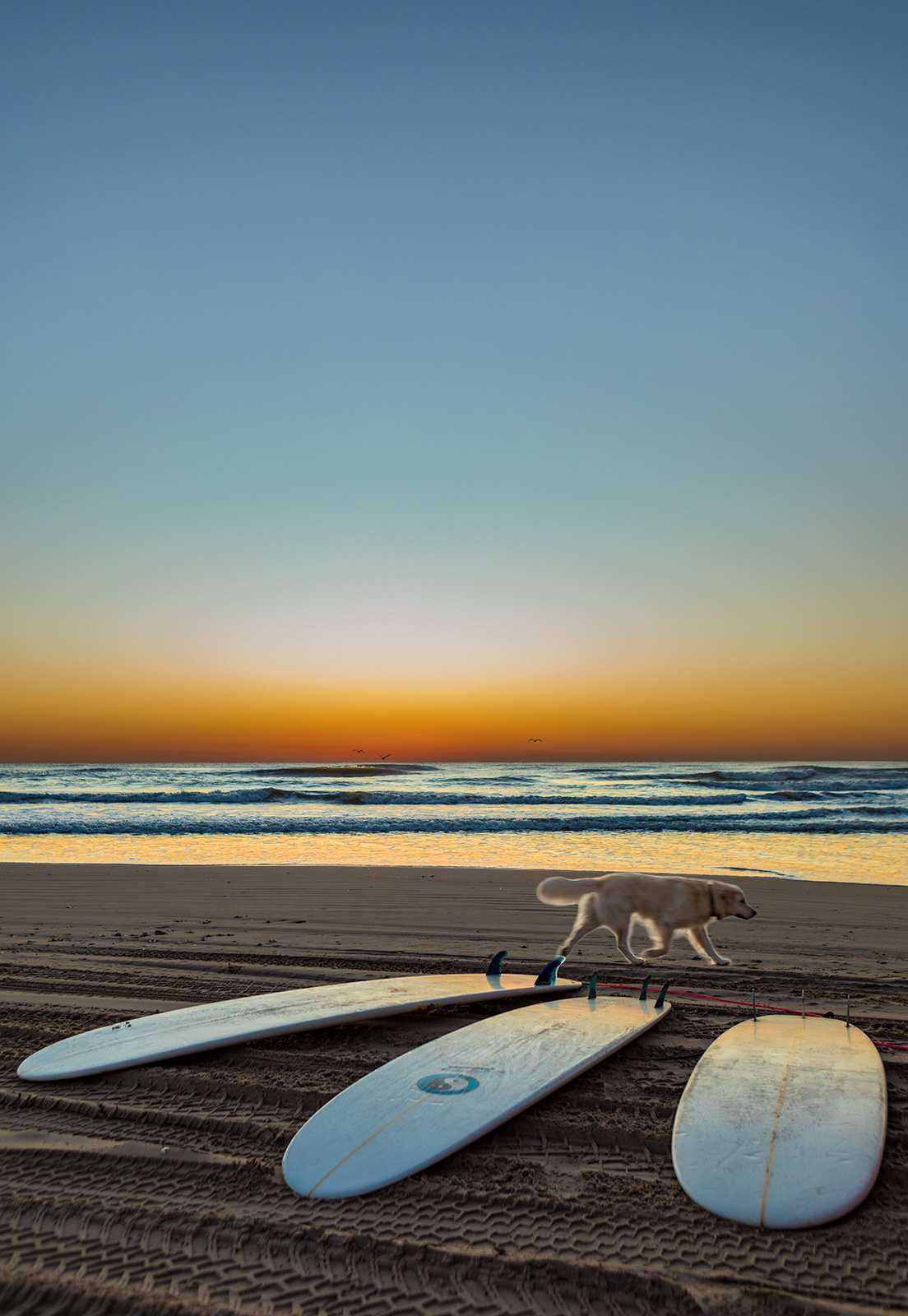 Surfboards with dog on the Texas beach at sunrise
