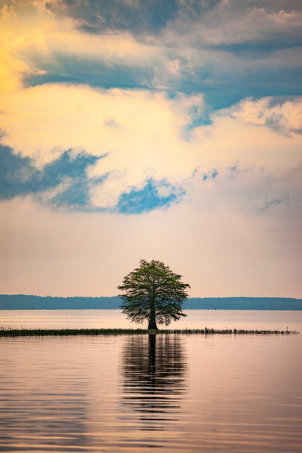 Lone tree on Toledo Bend Reservoir, Texas