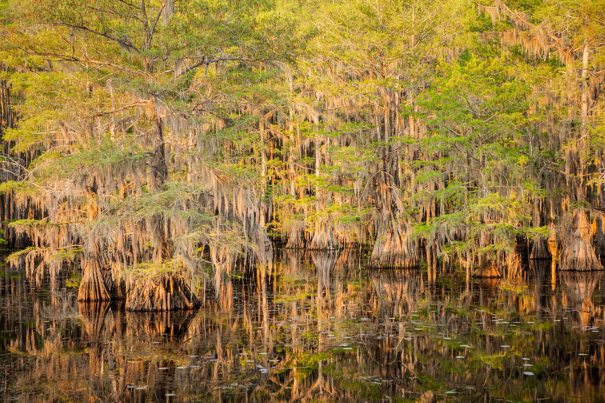Fall Cypress, Caddo Lake State Park